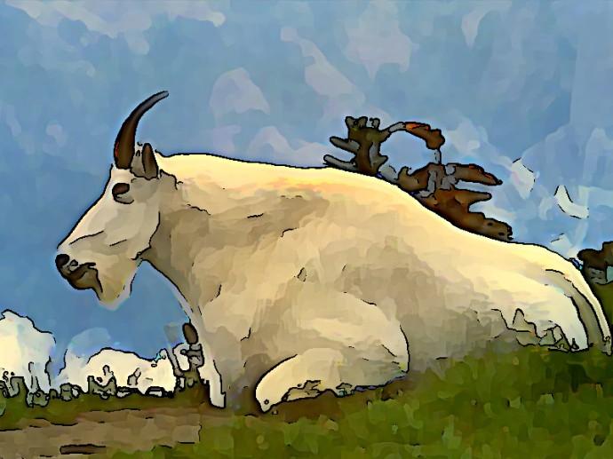 goat final