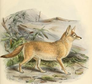 το πάθημα της πονηρής αλεπούς