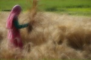 Γυναίκα αγρότη