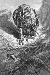 Γκραβούρα του Ernest Griset (1844-1907) με τίτλο «hawk and nightingale» εμπνευσμένος από τον μύθο του Αισώπου «Γεράκι και αηδόνι»